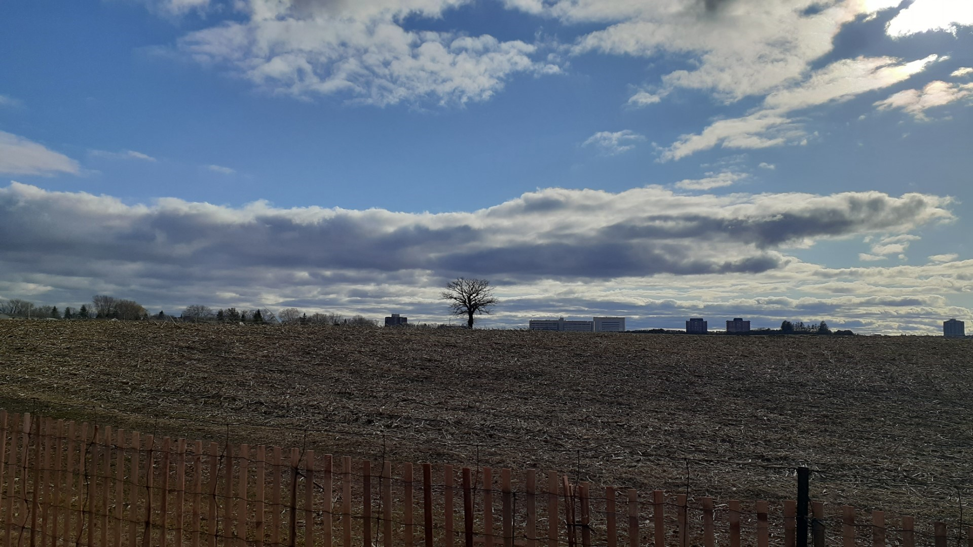 Tree that takes self-isolation very seriously, Ottawa, Experimental Farm, April 2020