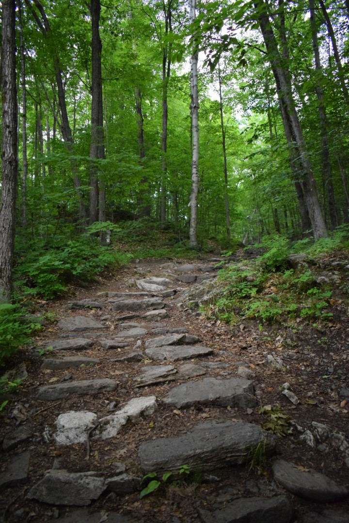 Lauriault Trail, Gatineau Park, June 2020