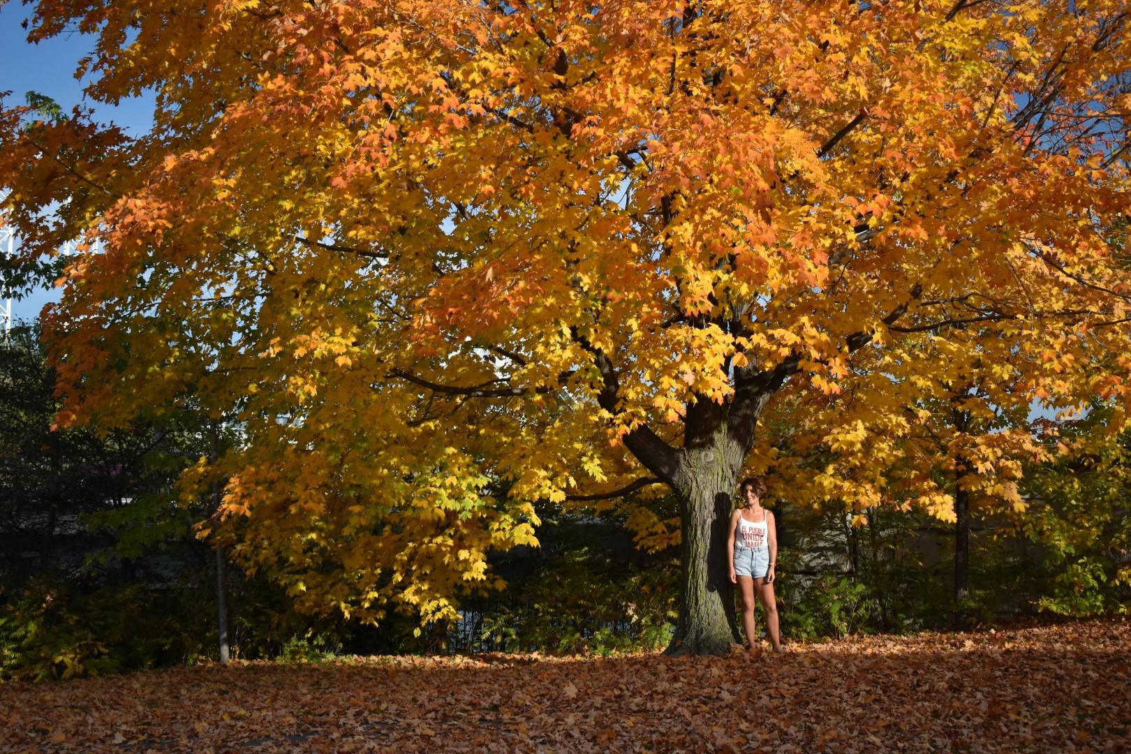 Green Island, Sussex Drive, Ottawa